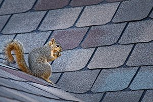 3 THINGS TO CONSIDER WHEN CHOOSING NEW SHINGLES
